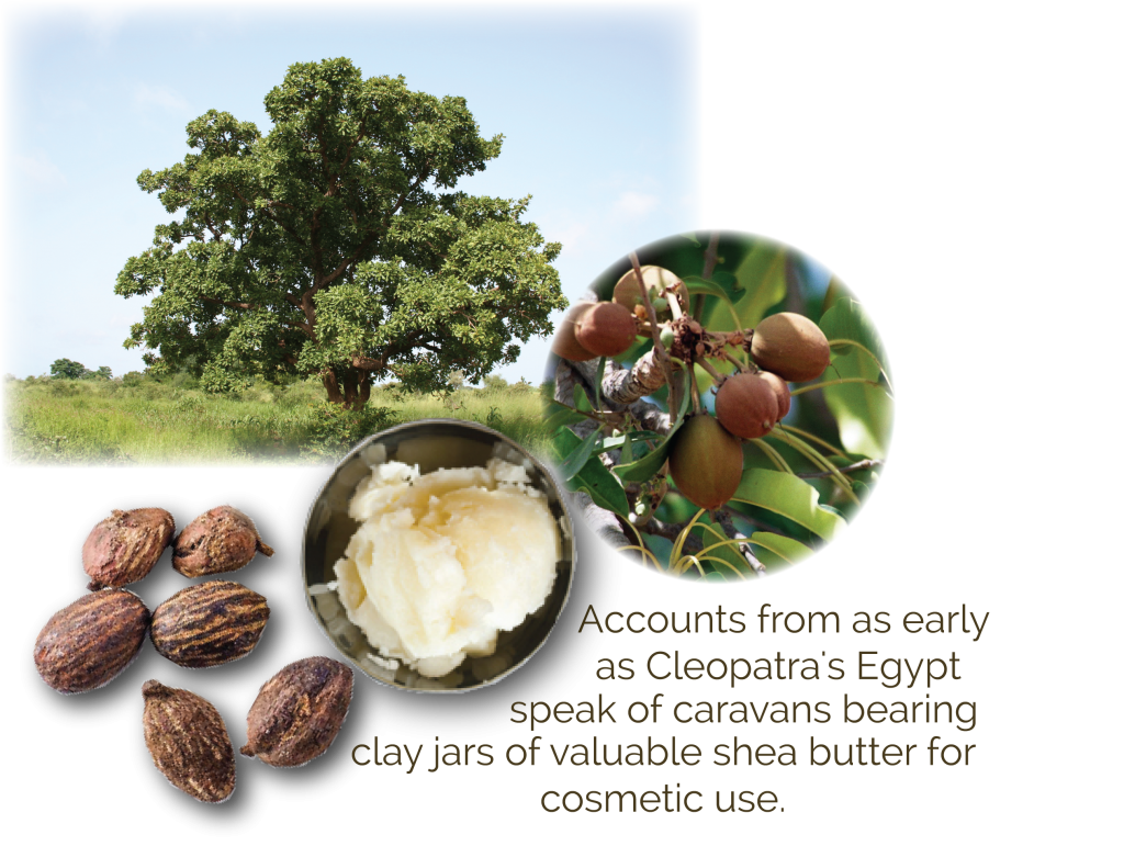 Shea Butter Organic ingredient in kids skincare for eczema and dry skin