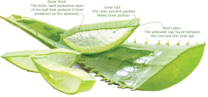 Aloe Vera Leaf Juice organic ingredient used in children's skincare